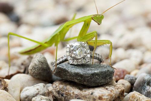 甚至是自然中的小动物
